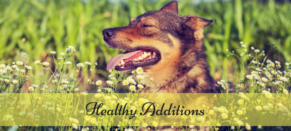 dog food, healthy additions, foods with health benefits for dogs