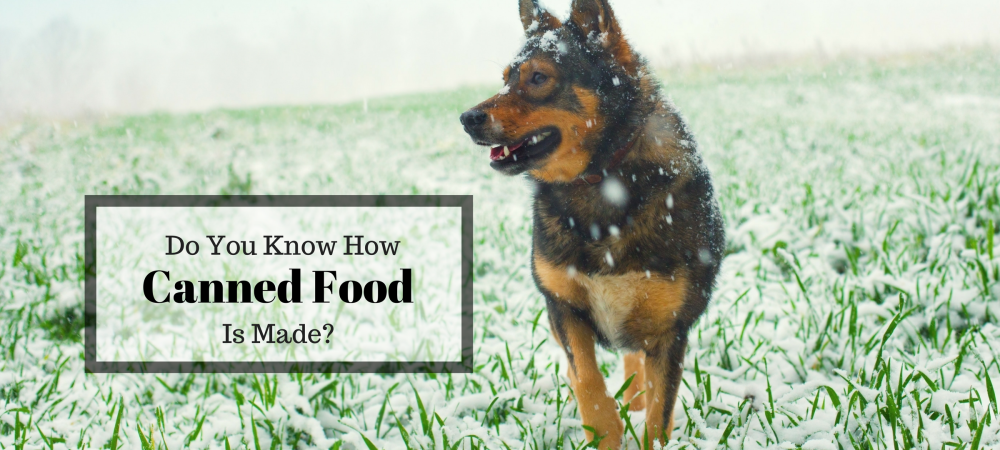 dogs, dog food, how canned food is made