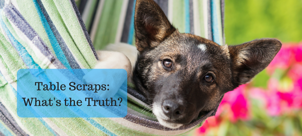 dogs, dog food, feeding table scraps, truth, health