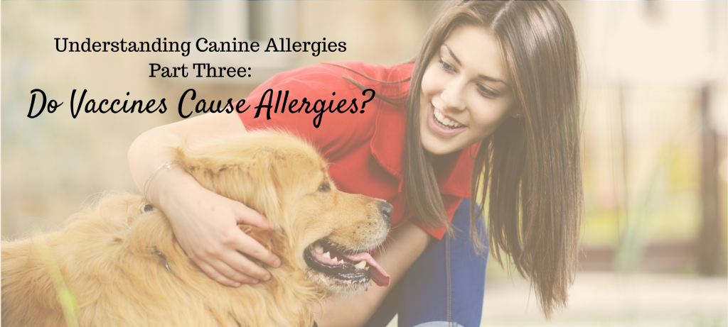dogs, canine allergies, do vaccines cause allergies