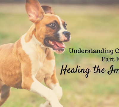 dogs, canine allergies, healing the immune system, diet, healing foods