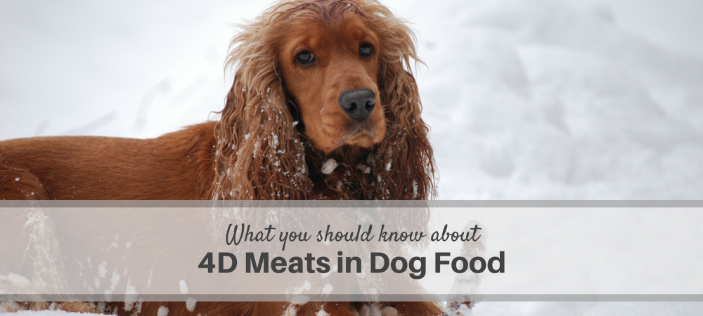 dogs, dog food, meat, 4D meats in dog food, safety, quality nutrition, ingredient definitions