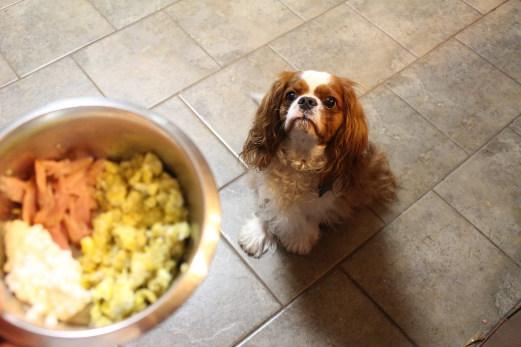 Resources for homemade dog food my satisfied dog dogs dog food homemade dog food recipes books ingredients dr forumfinder Image collections