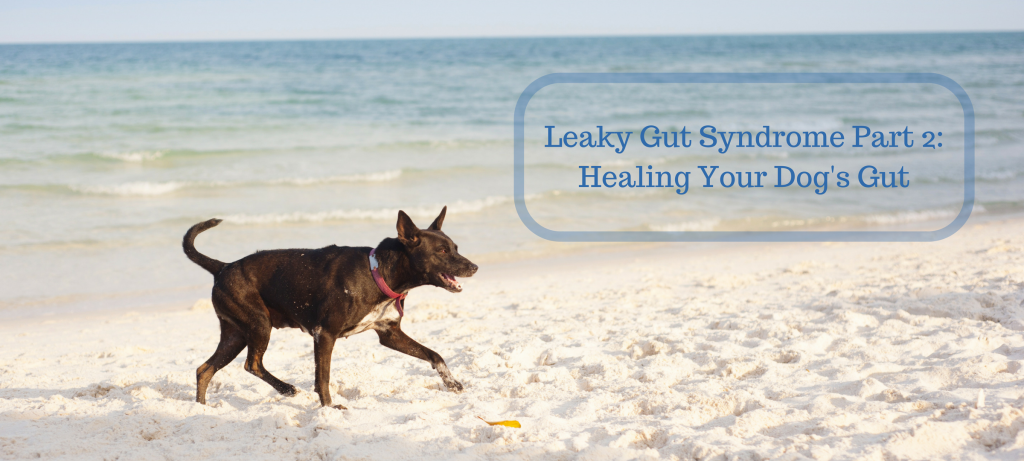 dog, food, leaky gut, dysbiosis, healing, natural, microbiome, healing foods