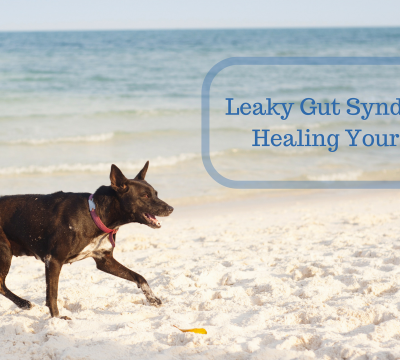 dogs, health, leaky gut, healing, diet