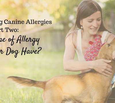 dogs, canine allergies, types of allergies, hypersensitivity, healing, hereditary, seasonal, contact, inhalant, chronic, food, reaction degrees, antibodies,