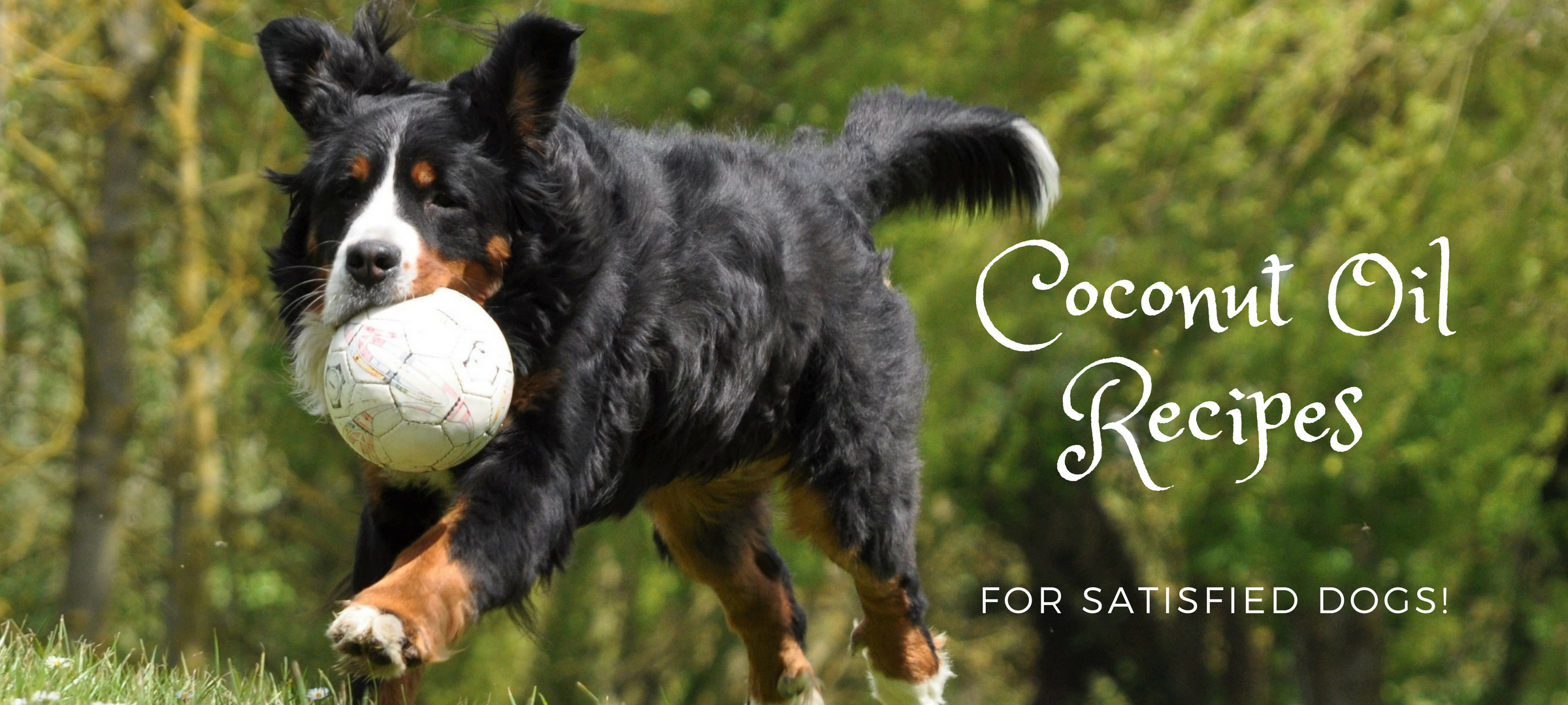 Coconut Oil Recipes for Satisfied Dogs