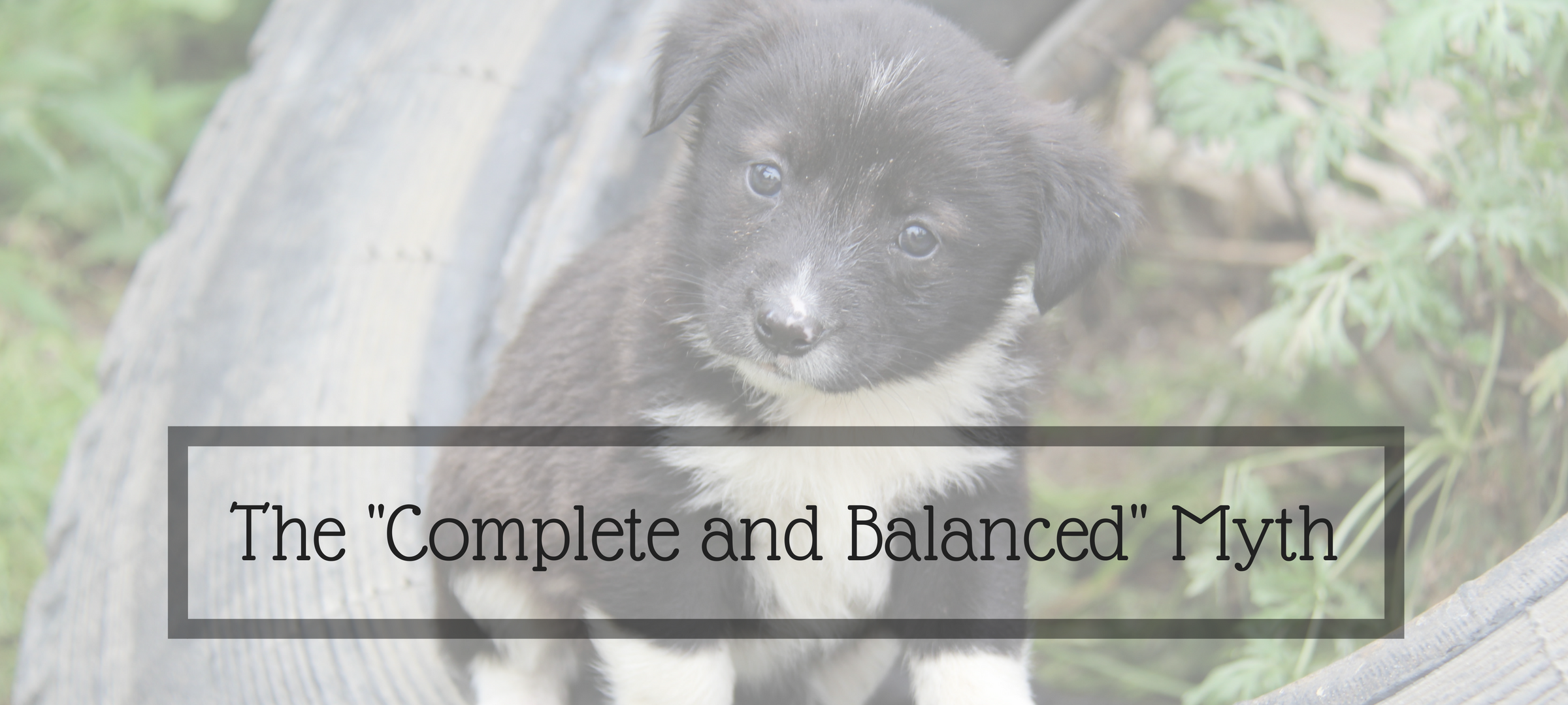 dogs, dog food, completed and balanced dog food, processing, macronutrient combination, AAFCO