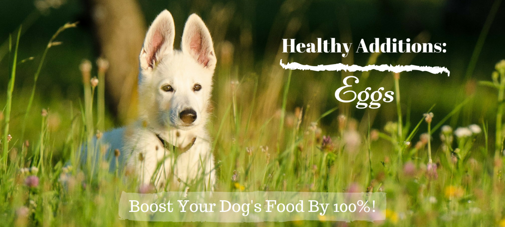 dogs, dog food, healthy additions, eggs, omega 3, protein, digestibility,