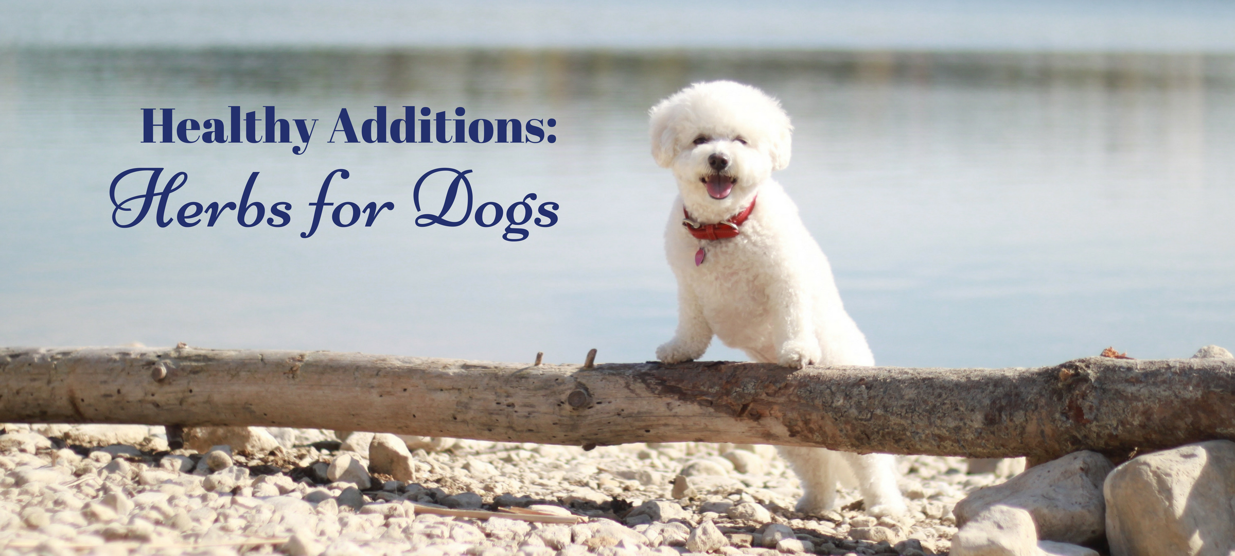 Healthy Additions: Herbs for Dogs - My Satisfied Dog