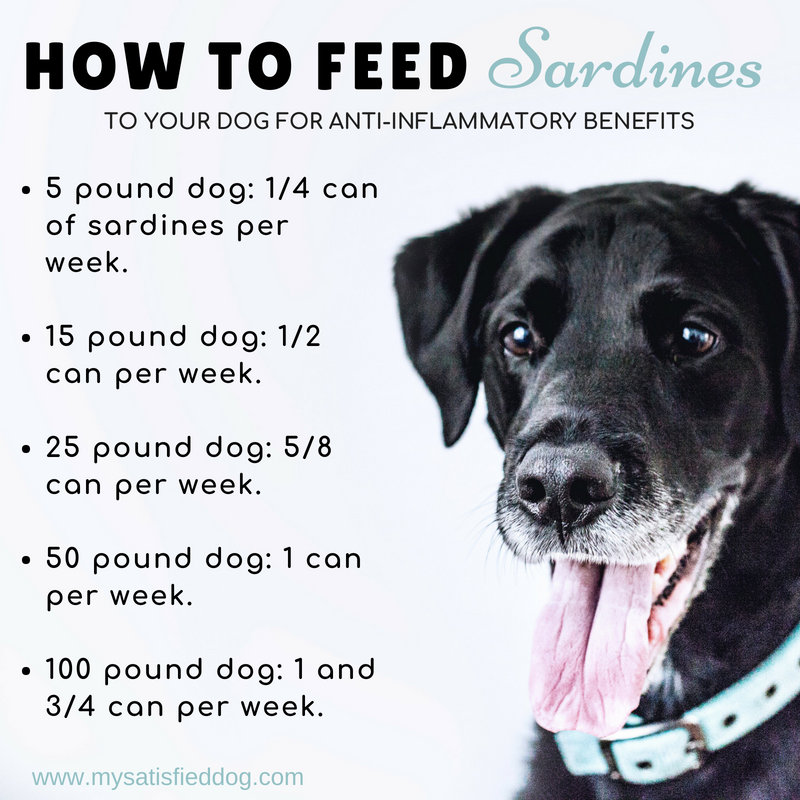 dogs, dog food, healthy additions, sardines, anti-inflammatory