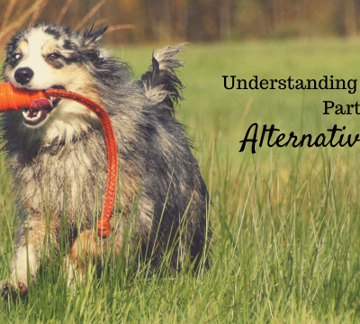 dogs, canine allergies, treating the symptoms, alternative, natural, remedies, allergies, allergic reactions, itching, hot spots