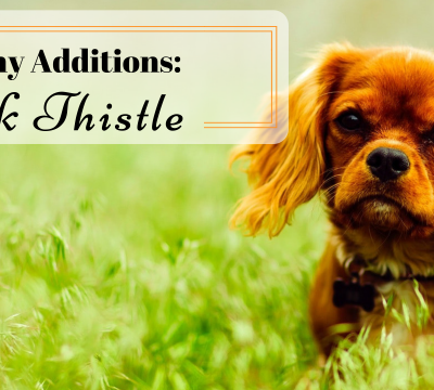 dogs, dog food, healthy additions, milk thistle, detox, liver disease, diabetes, spleen disease, allergies, allergic skin disease, healing aid, vaccines, flea, tick, heart worm, medication,