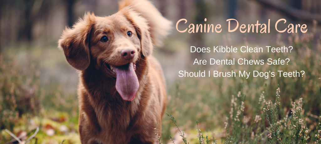 dogs, dog food, dental care, brushing your dog's teeth, does kibble clean teeth?, dental sticks and chews, greenies, does wet food make teeth dirty?