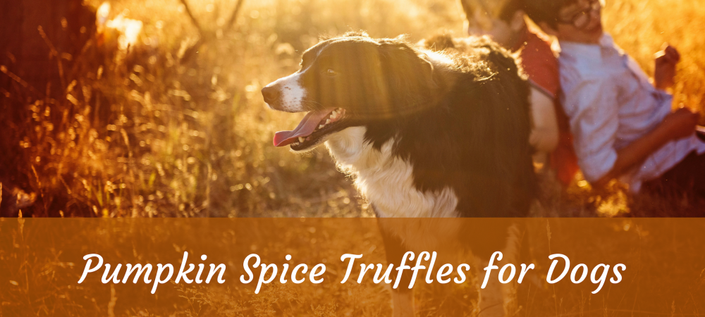 Dogs, Dog Food, Dog treats, pumpkin, turmeric, ginger, Bone Broth, butter, arthritis, fiber, spice, fall, autumn, Recipe, Coconut oil, constipation, diarrhea,
