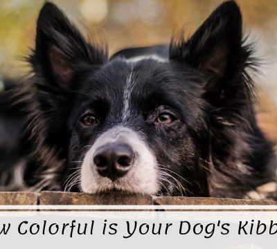 dogs, dog, food, food dyes, toxins, quality, dog eyesight